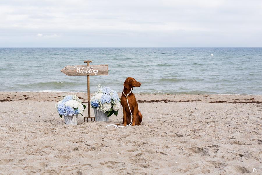 Hund vor dem Wegweisern zur Hochzeit am Strand, Portfolio, Strandhochzeit Ostsee Styled Shoot Hochzeit Strand Deko Ostsee Styled Shoot Rerik Strand